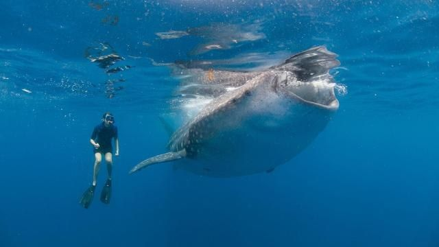 Vivo per miracolo! Sub ingoiato dalla balena e poi risputato - Il Video