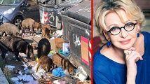 Cinghiali a Roma : la foto shock pubblicata da Enrica Bonaccorti scatena polemiche