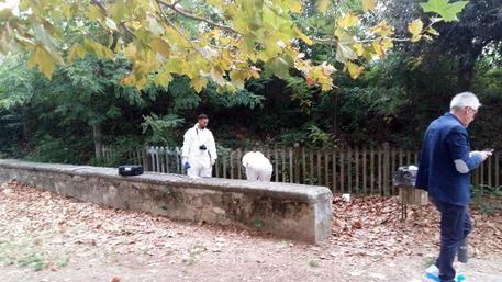Firenze, la giovane 17enne ferita nel parco di Montelupo a ottobre : Arrestato un 21enne