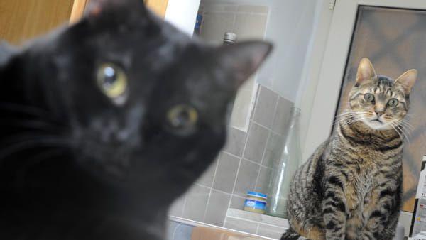 500mila di euro al Comune per i gatti! Il testamento di una vedova e senza figli