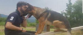 Kaos, giallo sulla morte del cane eroe... L