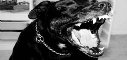 Cane di grossa taglia azzanna bimbo di 8 anni all