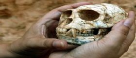 Spagna : primate di 35 milioni di anni fa