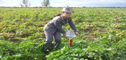 Terra dei Fuochi : A Caivano sequestrati 13 terreni e 15 fondi agricoli
