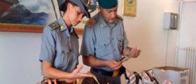 Varese : Bimbo di 8 anni lavorava in un laboratorio di pelletteria per l