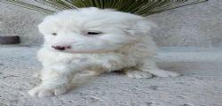 Ragusa : 70enne getta cinque cuccioli nel fiume