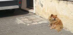 Come in Hachiko! Il padrone muore, il cane lo aspetta lì da 3 anni
