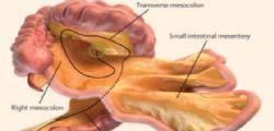 Il mesentere è il nuovo organo del corpo umano