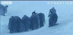 Antartide, la troupe tv salva i pinguini intrappolati ed emoziona i telespettatori
