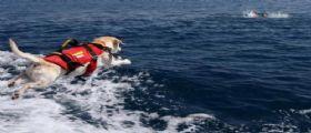 350 Cani Bagnino impegnati sulle nostre spiagge per proteggerci