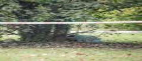 Roma : Cercano il figlio 23enne scomparso e lo ritrovano morto in un giardino durante le ricerche