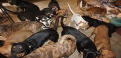 Un mostro di categoria 5! Accoglie 97 cani in casa per salvarli dall