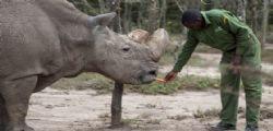 Kenya : morto Sudan, l