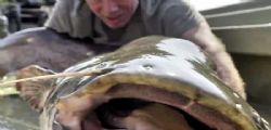 Il mostro del Garda! Jeremy Wade di River Monsters ha preso un pesce da oltre 100 kg