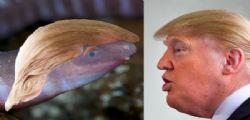 Dermophis donaldtrumpi! Un serpentello chiamato come Donald Trump