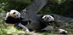 Zoo di Atlanta : Un nome per i due panda gemelli