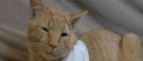 Pennsylvania : Il gatto Opie salva la vita al suo padroncino