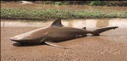 Australia : surfista 17enne uccisa da uno squalo