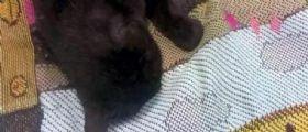 Gattina uccisa da una freccia a Refrontolo : Taglia di 4000 euro