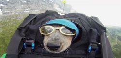 Dean Potter scala montagne e si lancia col paracadute col suo cane Whisper