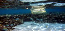 Ispra : 77% di rifiuti in mare è plastica