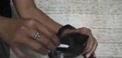 Fermiamo questo scempio! Spegne sigaretta sul muso di un cucciolo, il Video choc sul web