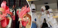 Allarme aviaria nuovo virus H7N9  : Può uccidere in tutto il mondo