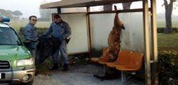 Coriano/ Lupo ucciso e appeso a fermata bus : due denunciati
