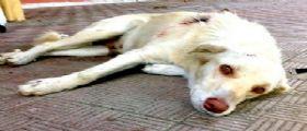 Agrigento : Scoperto Canile lager