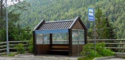 Trentino : autista bus lascia a piedi i profughi e rischia licenziamento