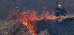 Incendi Bolivia : Oltre 2 milioni di animali selvatici morti