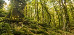 Me ne vado in India! Per sfuggire ai debiti vive in una grotta in una foresta
