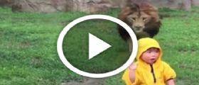 Zoo Tokyo : Il leone punta un bambino per mangiarlo