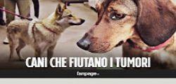 Cancro : anche in Italia i cani che fiutano il tumore