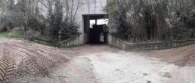 Livorno, uomo trovato impiccato nel bosco : Aiutateci a capire chi è