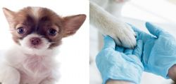 Malattia misteriosa uccide cani in Norvegia! Già 25 morti in 48 ore
