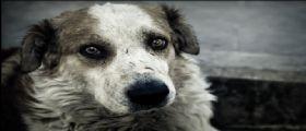 Villafranca : Cane ridotto in fin di vita a colpi di pala e zappa