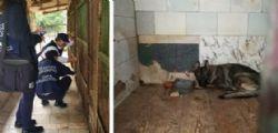 Allevamento lager a Udine : Cani non adatti isolati tutto il giorno
