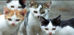 Gatti mutilati e uccisi con veleno! caccia al sadico killer nel pavese