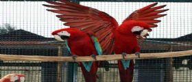 Cremona, pappagallo ucciso dalle pallonate : Proprietario chiede 150mila euro a società sportiva