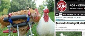 La gallina Cicely si rompe una zampa : Il proprietario spende 2200 euro per una protesi in 3D