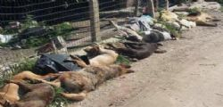 Sciacca/ avvelenati 30 cani randagi : minacciata su Facebbok il Sindaco