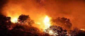 Sarno - vivaio nel mirino della camorra : Ti bruciamo come le tue piante