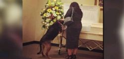 Il cane Sadie partecipa al funerale del suo padrone e finalmente trova la pace