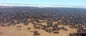 Argentina : Spiagge invase dagli scarafaggi