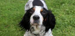 La cagnolina Siria seppellita viva! 84enne condannato ... ma con pena sospesa