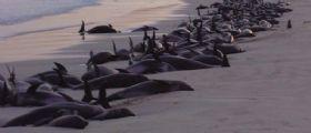 Stati Uniti : Strage di delfini, più di mille esemplari morti a causa del morbillo