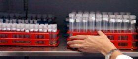 Vaccini antinfluenzali Fluad bloccati dall