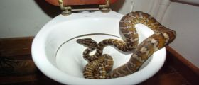 Attenti ai serpenti : possono mordere lì...