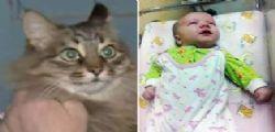 Russia : La Gatta Marsha salva un neonato abbandonato al freddo